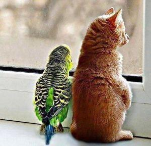 anders-kijken-kat-parkiet