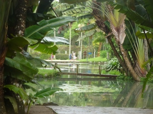 Rio botanische tuin